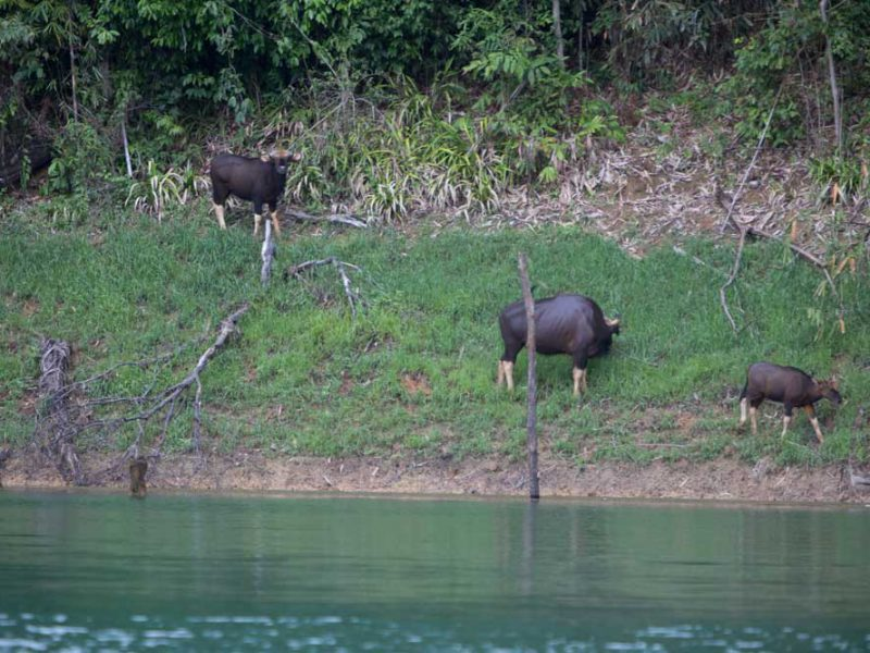 wildlife at Cheow Lan Lake - Khao Sok