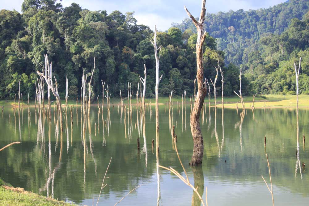 Trees in the Khao Sok Lake