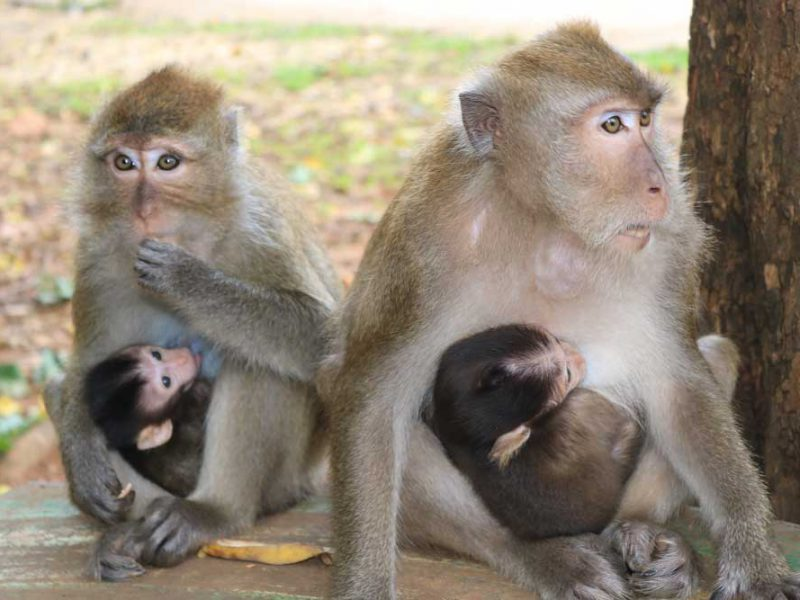 two monkeys with their babies