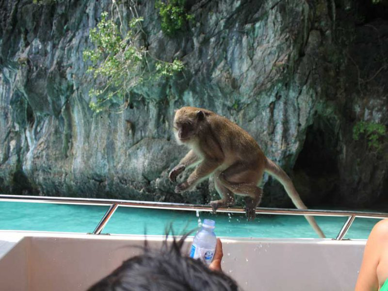 monkey is sitting on a speedboat