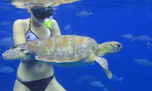 Snorkeling with turtle on Similan Islands