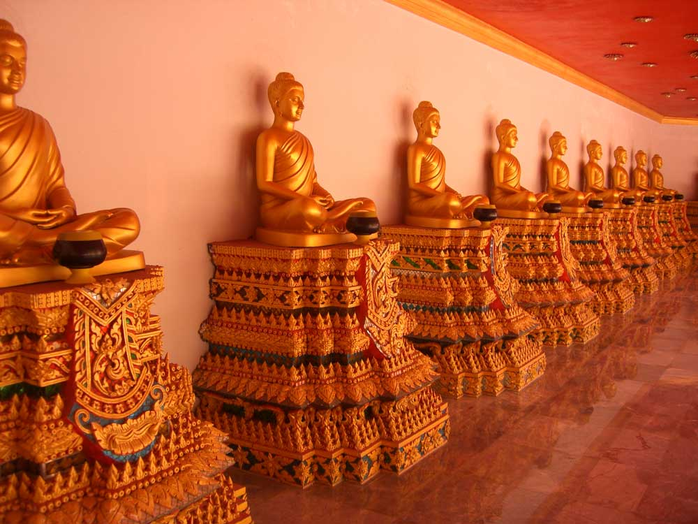 many golden buddha statues