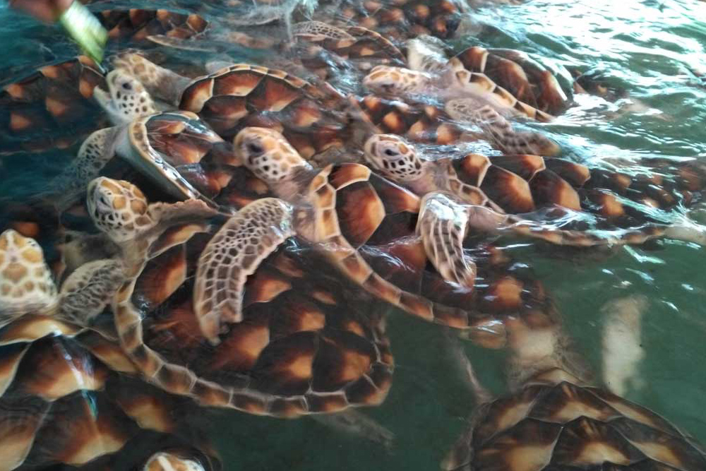 Turtles swimming
