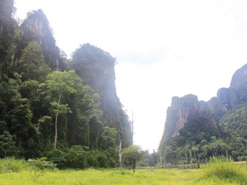 nature of Khao Sok