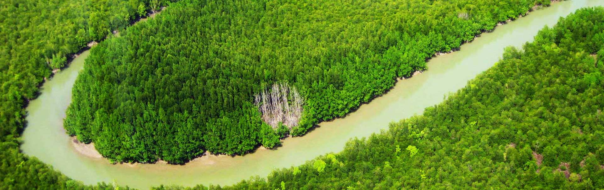 Mangroves and waterways in Phang Nga Bay