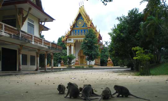 monkey in front of a temple