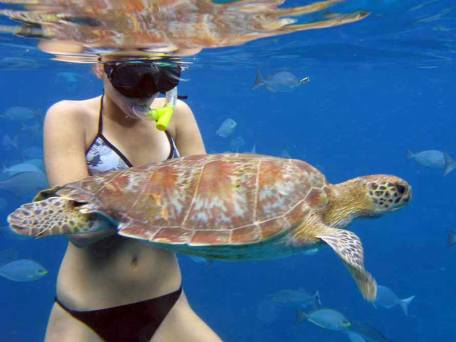 Girl snorkelling with a turtle