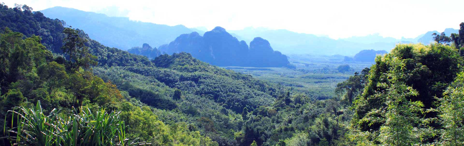 Khao Sok as seen from the view point