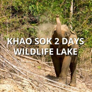 Khao Sok 2 days wildlife lake